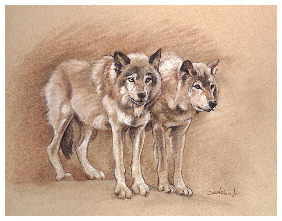 Wolves - Wildlife Drawing - 11x14 charcoal, sepia + sanguine conté, chalk on toned paper