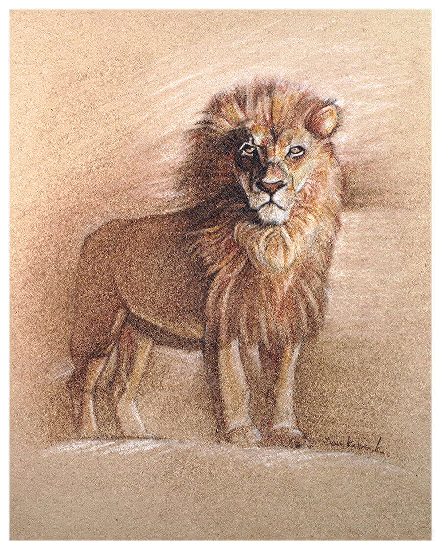 Lion - Wildlife Drawing -